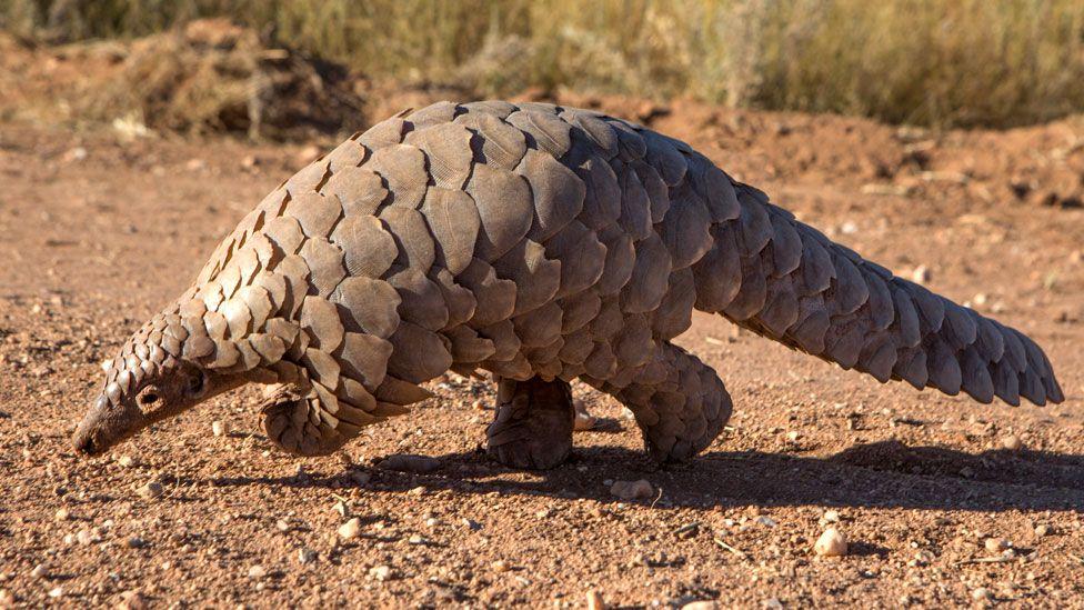 Top 10 Strangest Animals