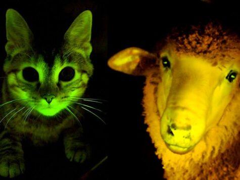 Top 10 Bioluminescent Animals