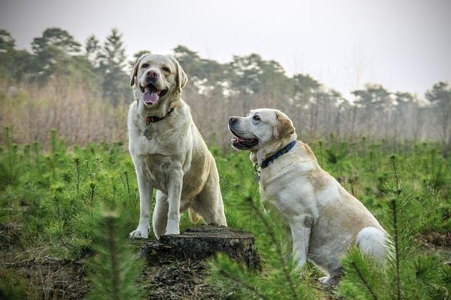 Most Intelligent Dog Breeds