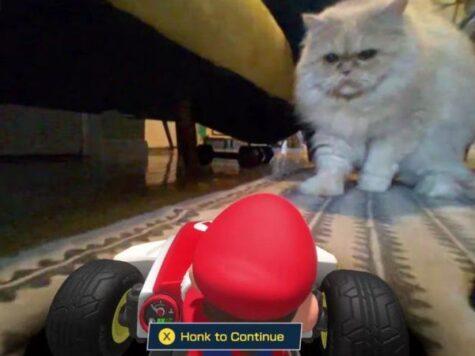 cat's don't like Mario