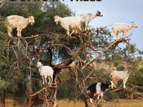 """Goats In Trees"" Calendar 2021"