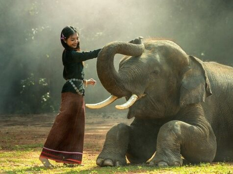 African And Asian Elephants