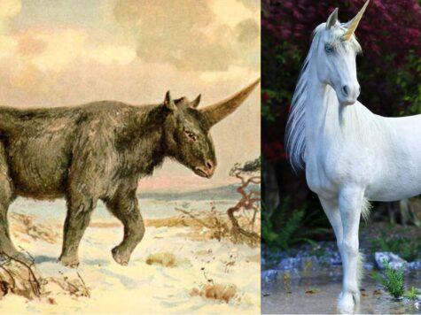 Unicorns were real