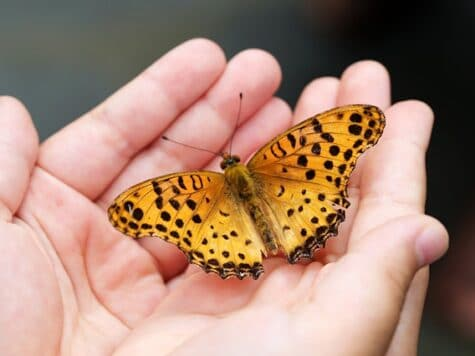 Shockingly Surprising Facts About Butterflies